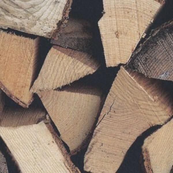 Holzstämme Digitaldruck
