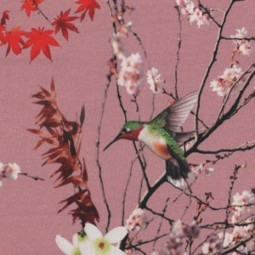 Winter japanese Birds rose